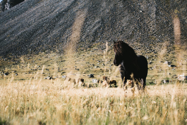 horse-007_o